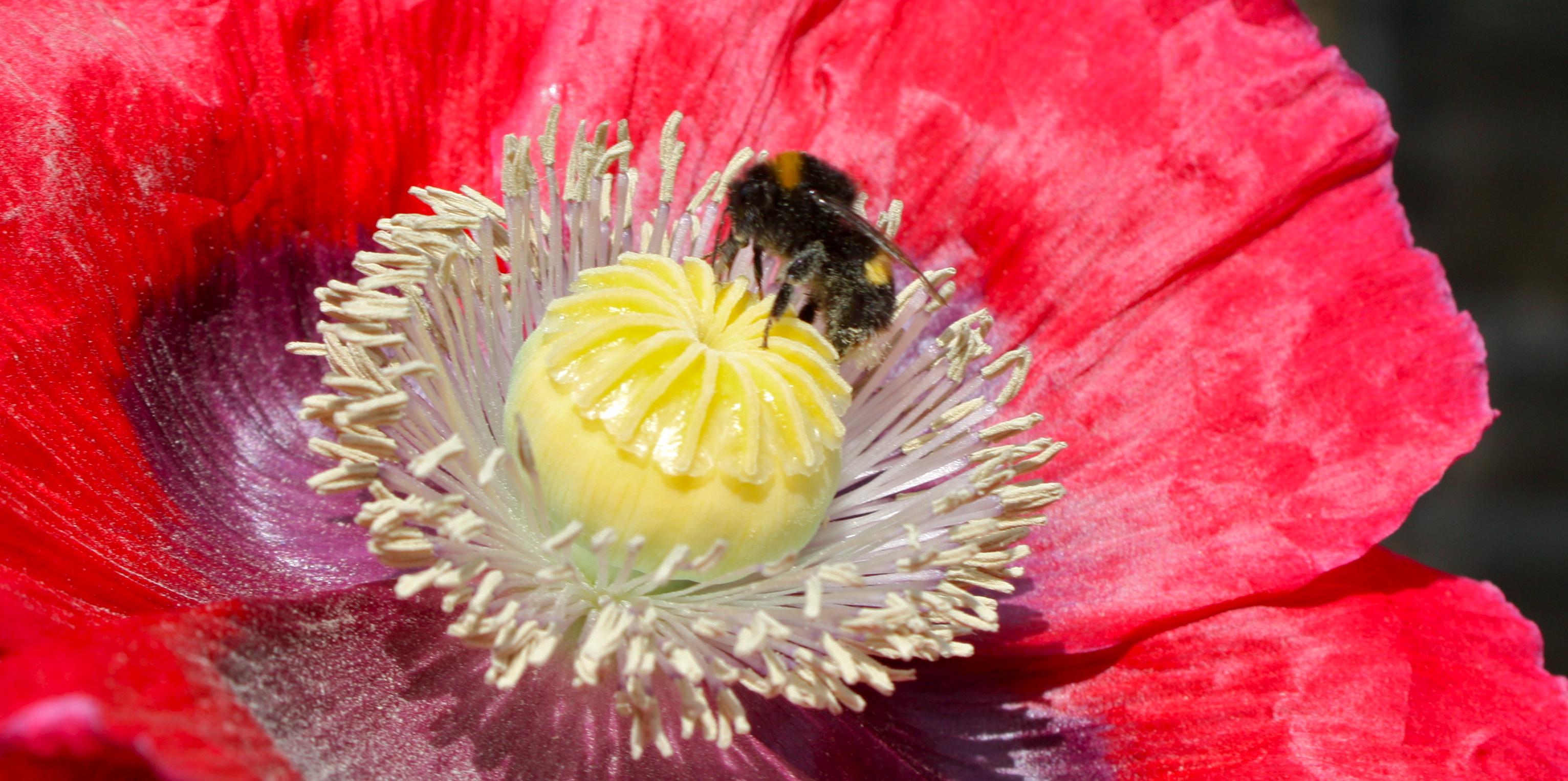 Poppy kissing Bumblebee