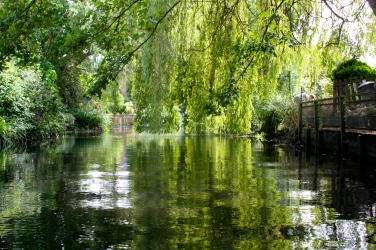 Wonderful Wandle